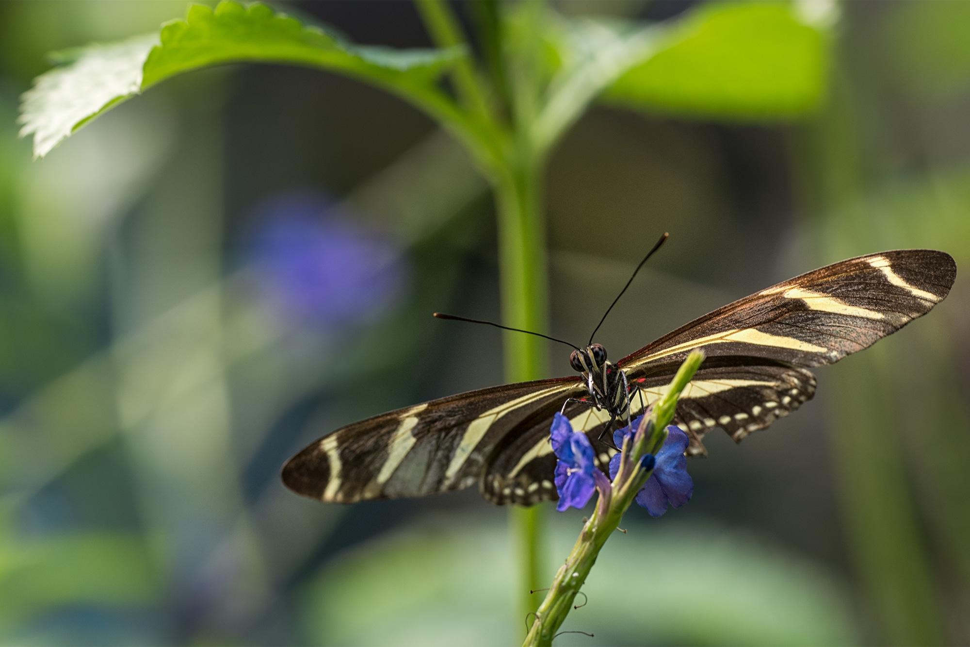 vlinder-2000x1333